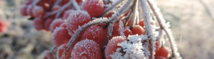 Weihnachten www.redaktion-lippstadt.de